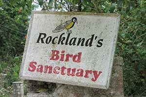 Rocklands Biird Sanctuary in Montego Bay