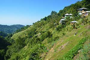 Blue Mountain hillside